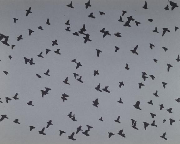 Superstudio, Laminato plastico serigrafato, Abet Print, 1969, Migrazione o Il volo. Black felt-tip pen on photographic print, light blue cardboard. Centre Pompidou, Mnam-CCI